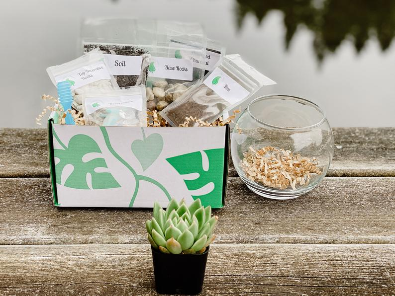 succulent terrarium kit with succulent and supplies in a box