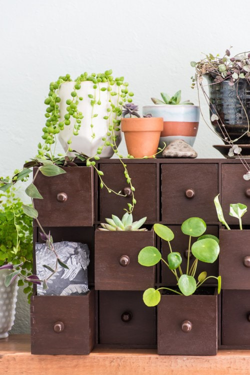 Love this display of plants in Ikea drawers