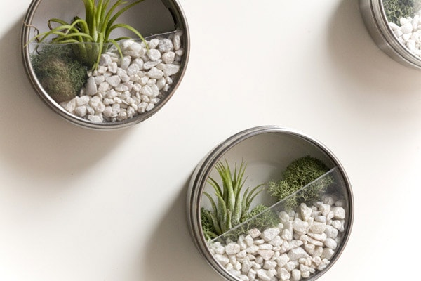 Metal ikea tins turned into terrariums on wall