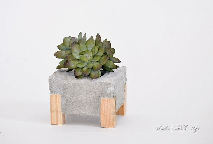 DIY concrete planter with wood legs on white background with succulent