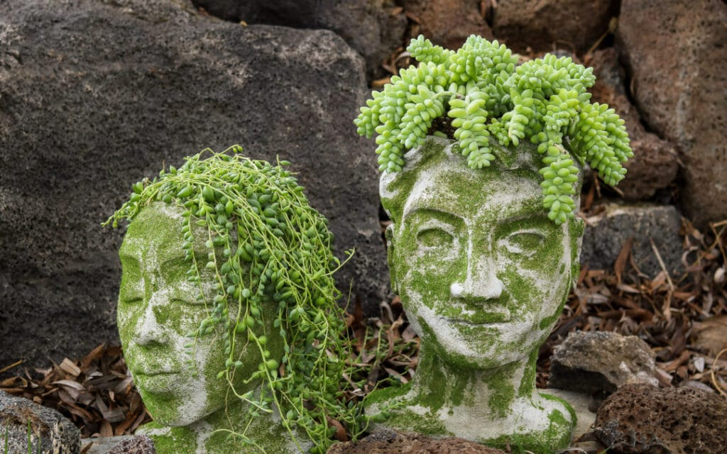 Concrete planters shaped like a man and woman head