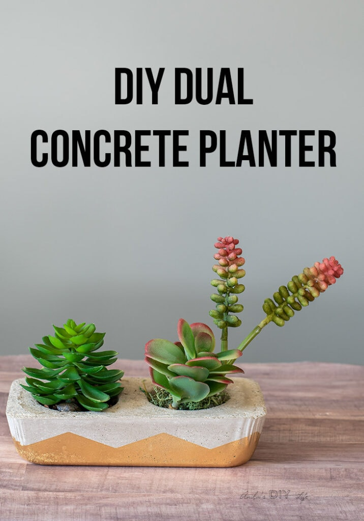 DIY concrete planter with succulents and text overlay