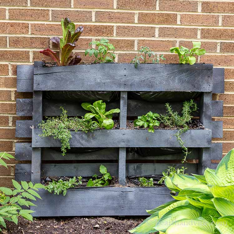 small space garden made from a pallet