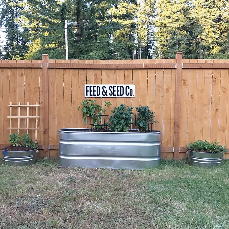 Stock tank used as a raised garden sitting in front of a cedar fence