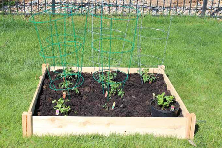 Small wood raised garden bed with tomato plants