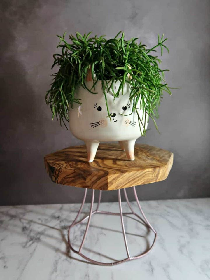 DIY plant stand made from lampshade frame with plant in a cat planter