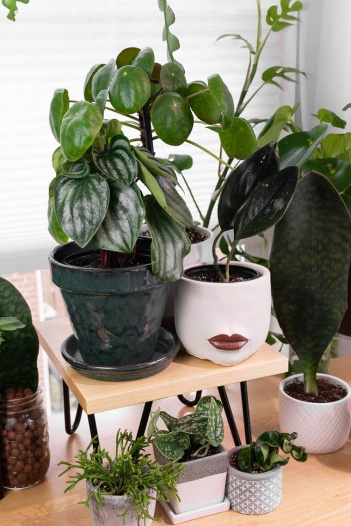 table top plant stand surrounded by plants