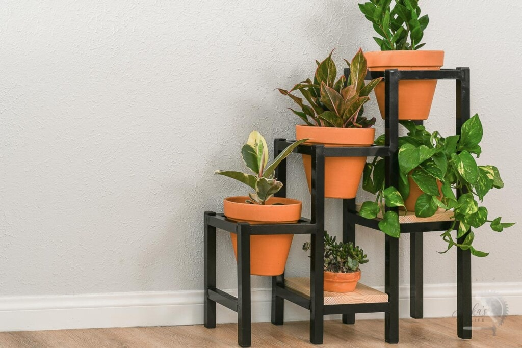 Black metal plant stand with terracota pots and plants