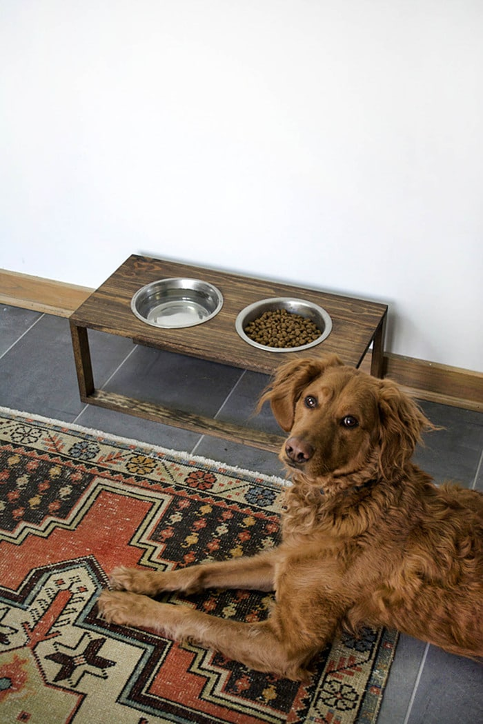 raised dog bowl stand with irish setter
