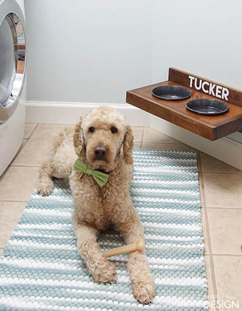 pet feeder attached to the wall with dog laying on a rug